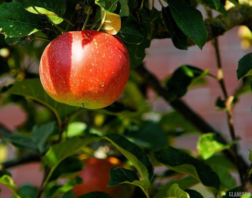 10 рецептов этой осени с запеченными яблоками